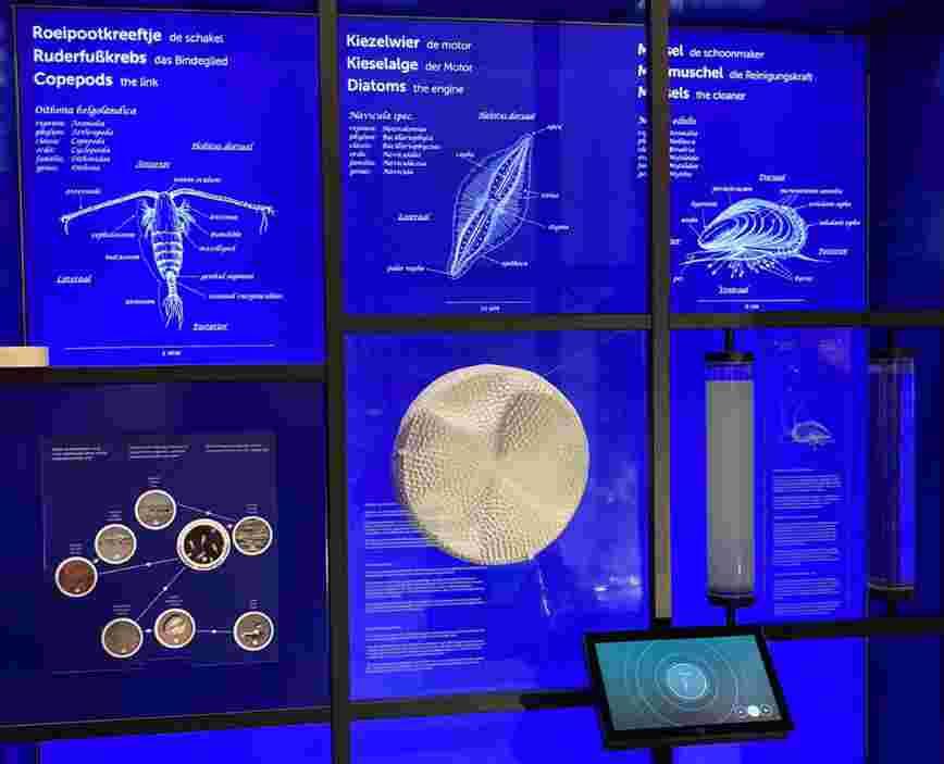 Diatomee bij Ecomare